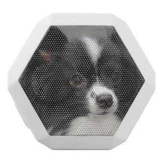 Papillon Dog White Boombot Rex Bluetooth Speaker
