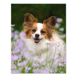 Papillon Dog Cute Romantic Portrait - Paperprint Art Photo