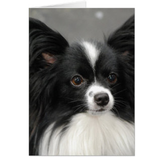 Papillon Dog  Note Card