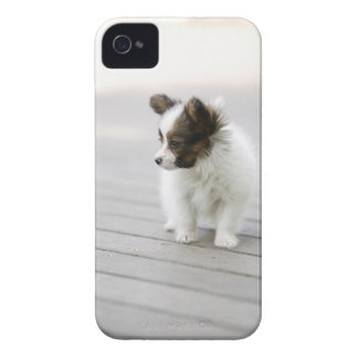 Papillon iPhone 4 Cover