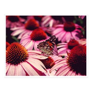 Papillon Postcard