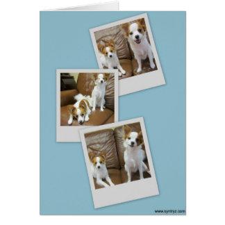 Papillon Puppies Photo Shoot Note Card