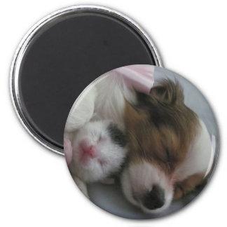 Papillon Puppy and Kitten 6 Cm Round Magnet