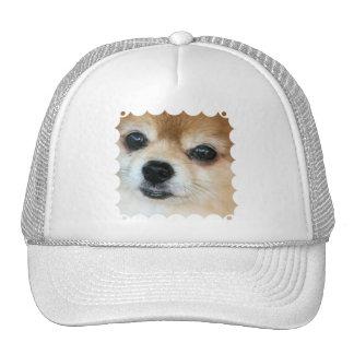 Papillon Puppy Baseball Hat