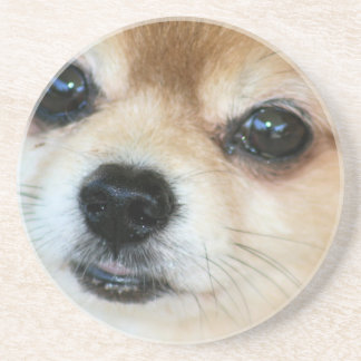 Papillon Puppy Coasters