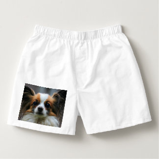 Papillon Puppy Dog Boxers
