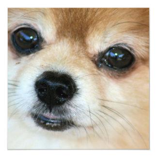 """Papillon Puppy Invitation 5.25"""" Square Invitation Card"""