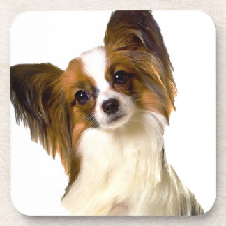 Papillon puppy Isolated on editable Background Pil Drink Coasters