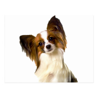 Papillon puppy Isolated on editable Background Pil Postcard