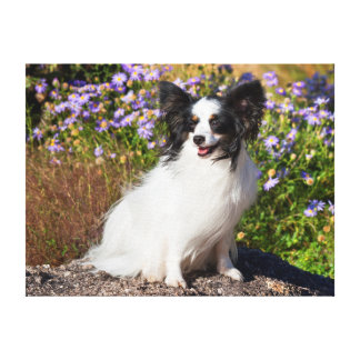 Papillon Sitting On A Boulder Canvas Print