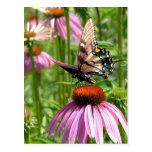 papillon sur la fleur post card