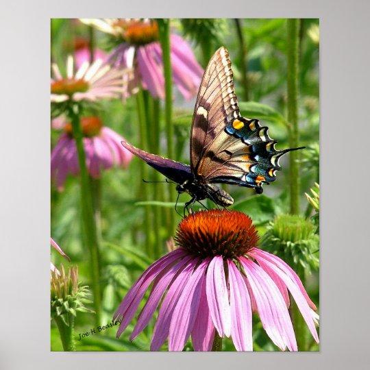 papillon sur la fleur poster