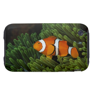 Papua New Guinea, false clown anemonefish and iPhone 3 Tough Case