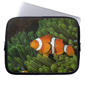 Papua New Guinea, false clown anemonefish and Laptop Sleeve