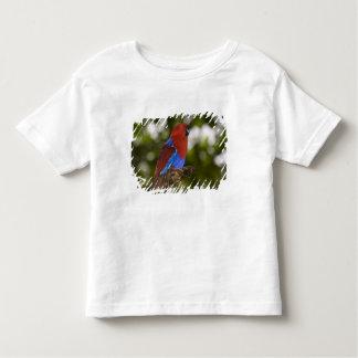 Papua New Guinea, Lae. Female Eclectus Parrot. Toddler T-Shirt
