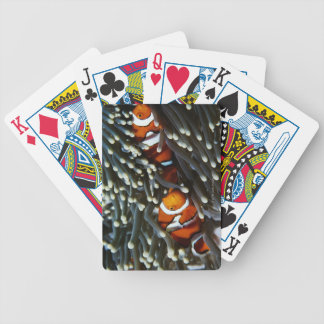 Papua New Guinea, two false clown anemonefish Bicycle Playing Cards