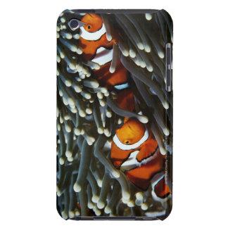 Papua New Guinea, two false clown anemonefish iPod Case-Mate Case