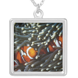 Papua New Guinea, two false clown anemonefish Silver Plated Necklace