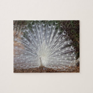 Paradise Peacock Jigsaw Puzzle