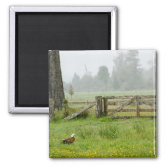 Paradise Shelduck and Mossy Gate Square Magnet