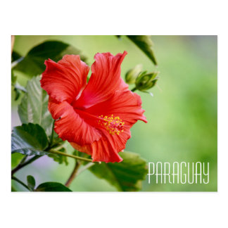 Paraguay hibiscus flower postcard