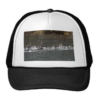 Parakeet Auklet flight, Castle Rock, Shumagin Isla Mesh Hat