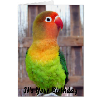 Parakeet Birthday card