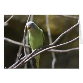 Parakeet Blank Greeting Card