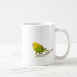 parakeet, coffee mug