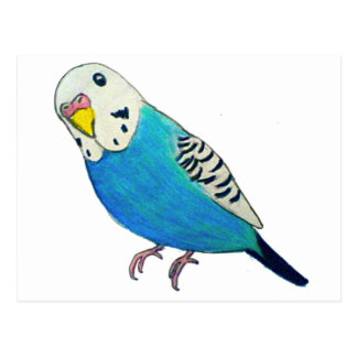 Parakeet Drawing Postcard
