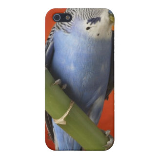 parakeet iPhone 5/5S cover