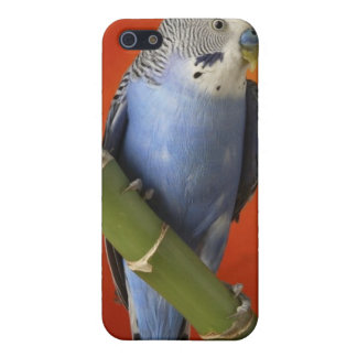 parakeet iPhone 5 case
