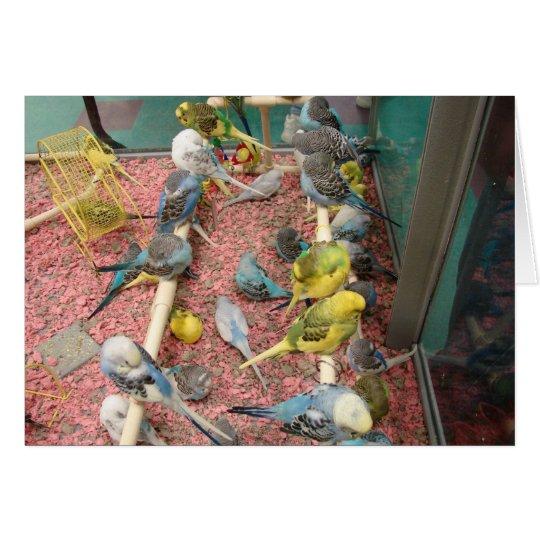 Parakeets Card