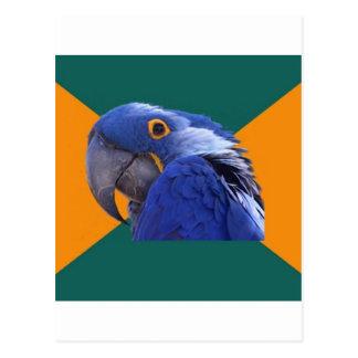 Paranoid Parrot Bird Advice Animal Meme Postcards