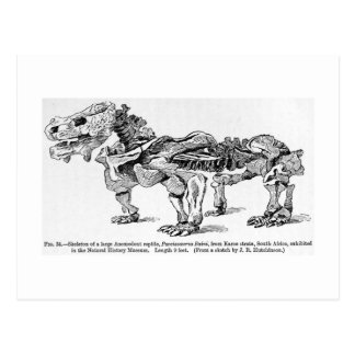 Pareiasaurus baini art postcard