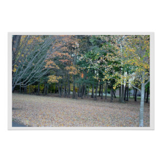 Park Fall Trees Photo Poster