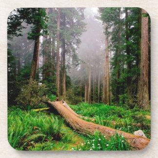 Park Fallen Nurse Log Redwood California Coaster