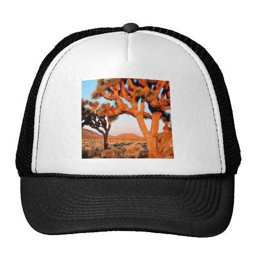 Park Sunrise Joshua Tree Monument California Hats