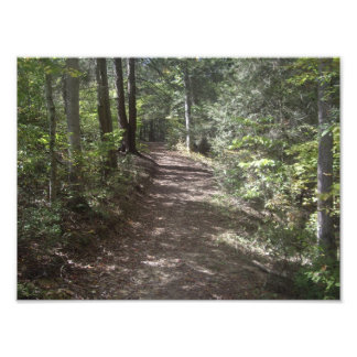 Park Trail Art Photo