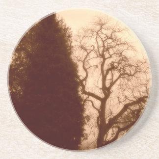 Park Trees Sandstone Coaster