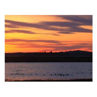 Parker River National Wildlife Refuge Waterfowl Postcard