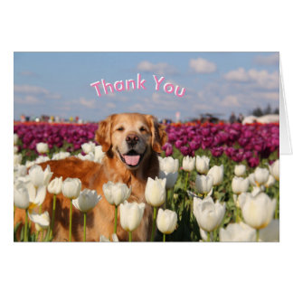 ParkerPup Thank You cards