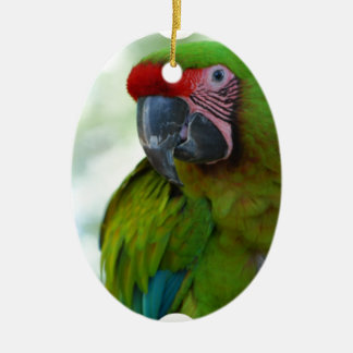 parrot-63.jpg christmas ornament
