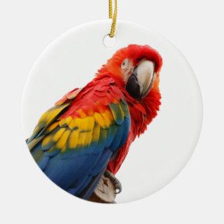 Parrot bird beautiful photo hanging ornament