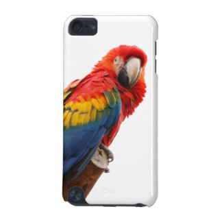 Parrot bird beautiful photo ipod touch 4G case iPod Touch 5G Cases