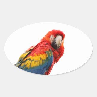 Parrot bird beautiful photo sticker, stickers
