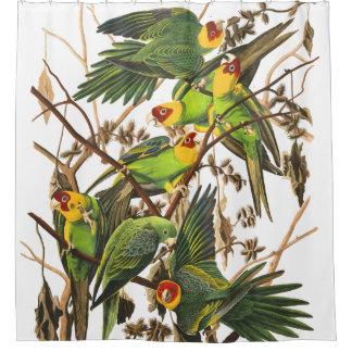 Parrot Birds Wildlife Audubon Shower Curtain