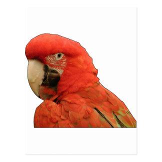 Parrot black outline. postcard