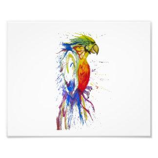 Parrot Budgie Bird Photographic Print