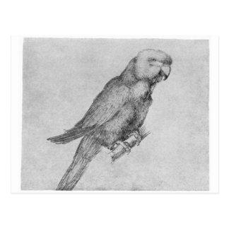 Parrot by Albrecht Durer Postcard